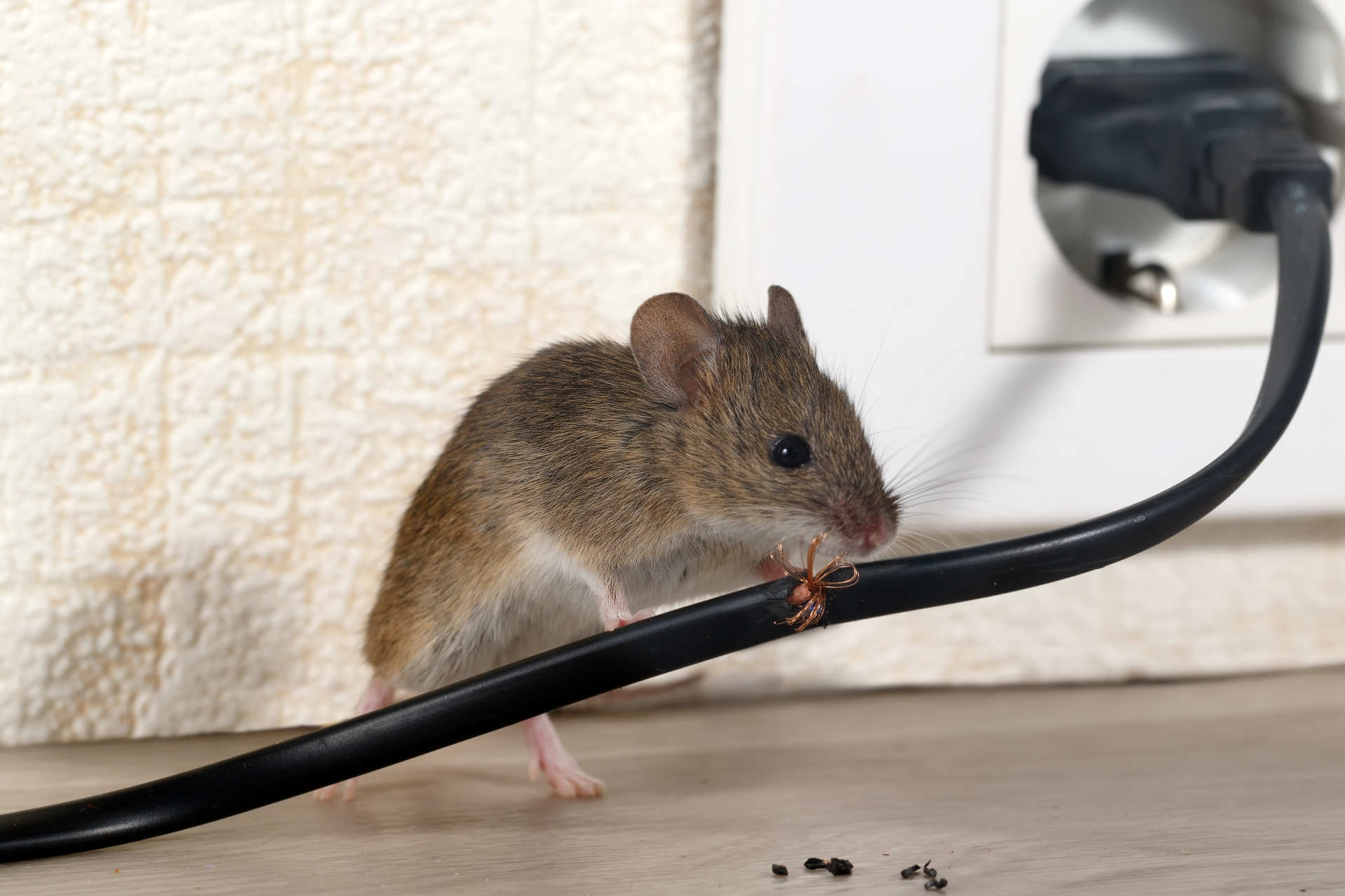Mice Infestation, Pest Control in North Feltham, East Bedfont, TW14. Call Now 020 8166 9746