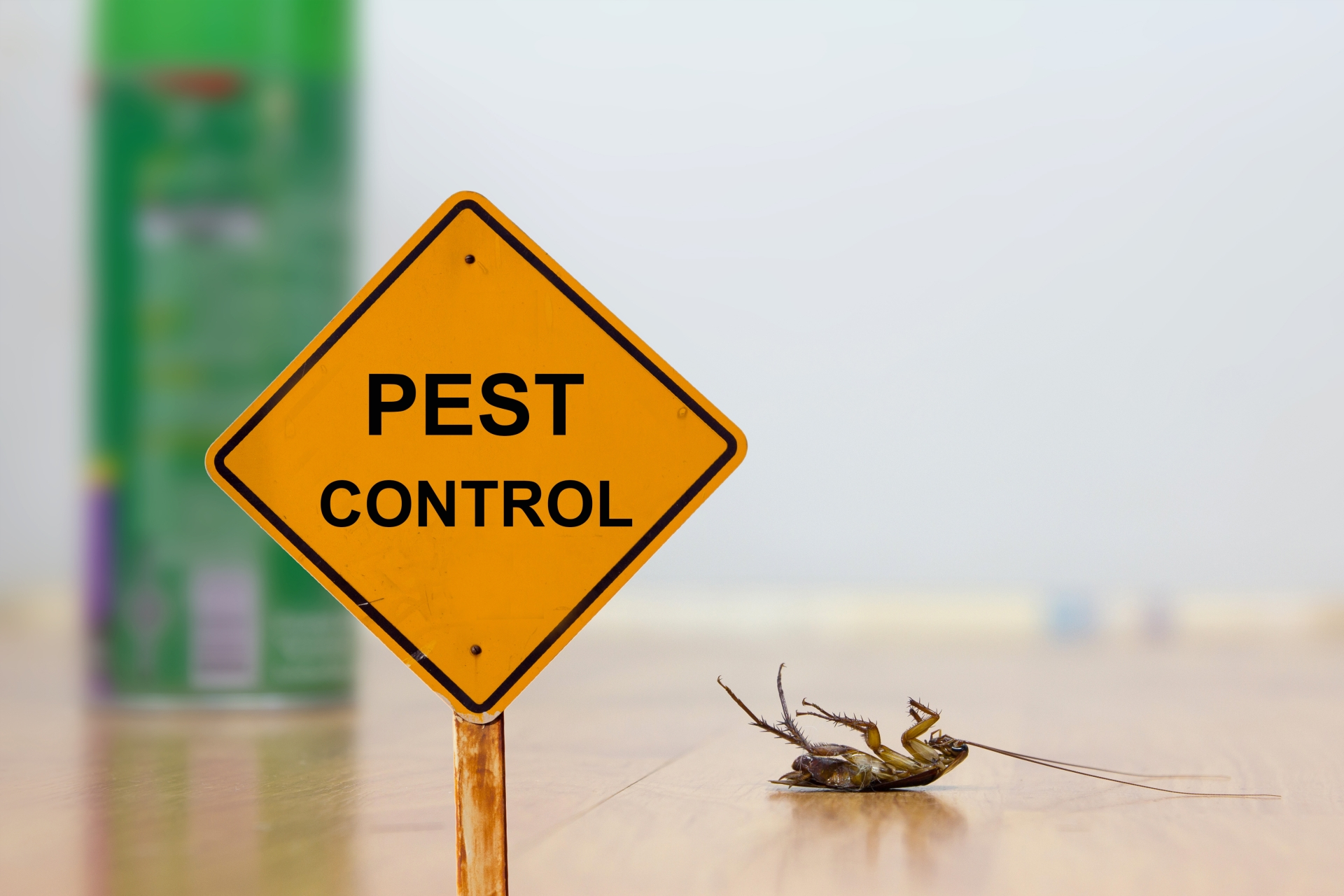 24 Hour Pest Control, Pest Control in North Feltham, East Bedfont, TW14. Call Now 020 8166 9746