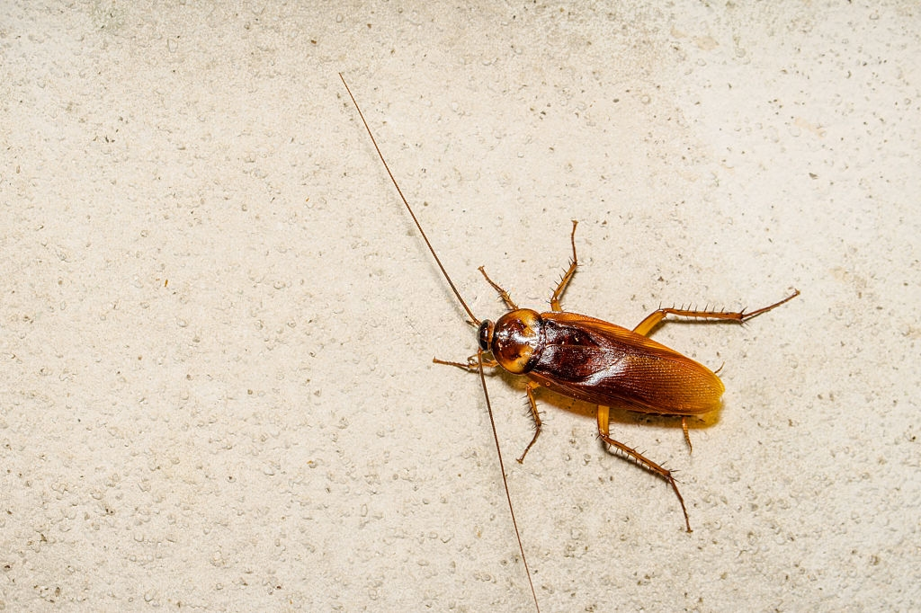 Cockroach Control, Pest Control in North Feltham, East Bedfont, TW14. Call Now 020 8166 9746